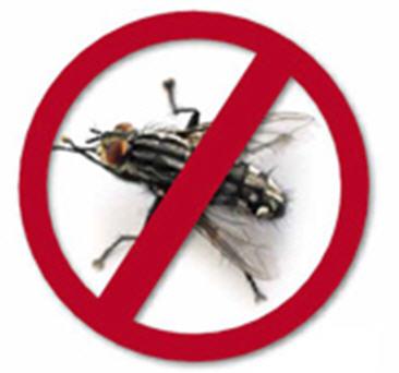Unsere besten Tipps, um Fliegen fernzuhalten