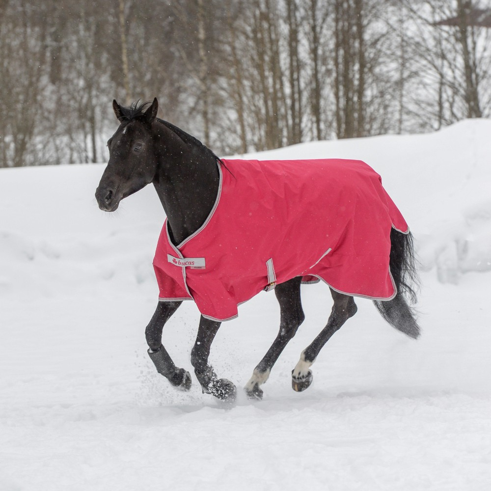 Die richtige Winterausrüstung für das Pferd