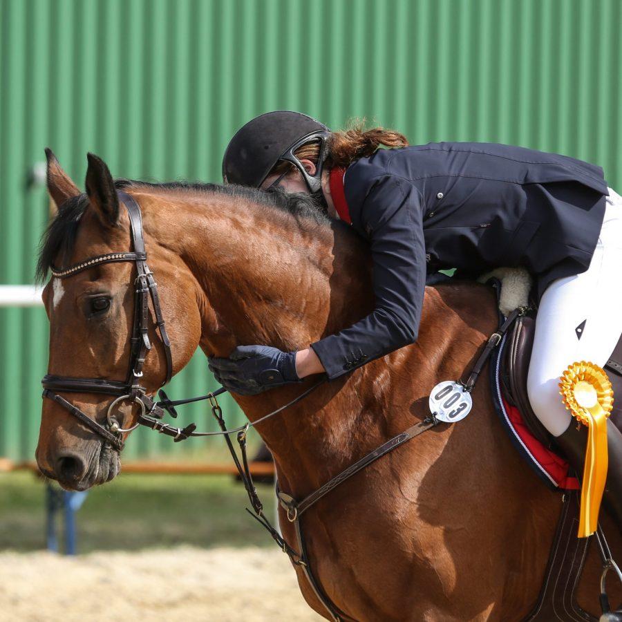 Wie du das Vertrauen des Pferdes aufbaust