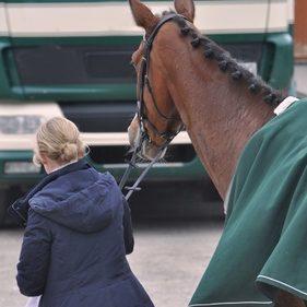 Schlundverstopfung: Wie helfe ich meinem Pferd?