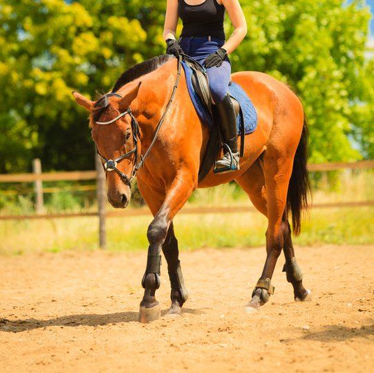 Lösen des Pferdes: Wie wärme ich mein Pferd auf?