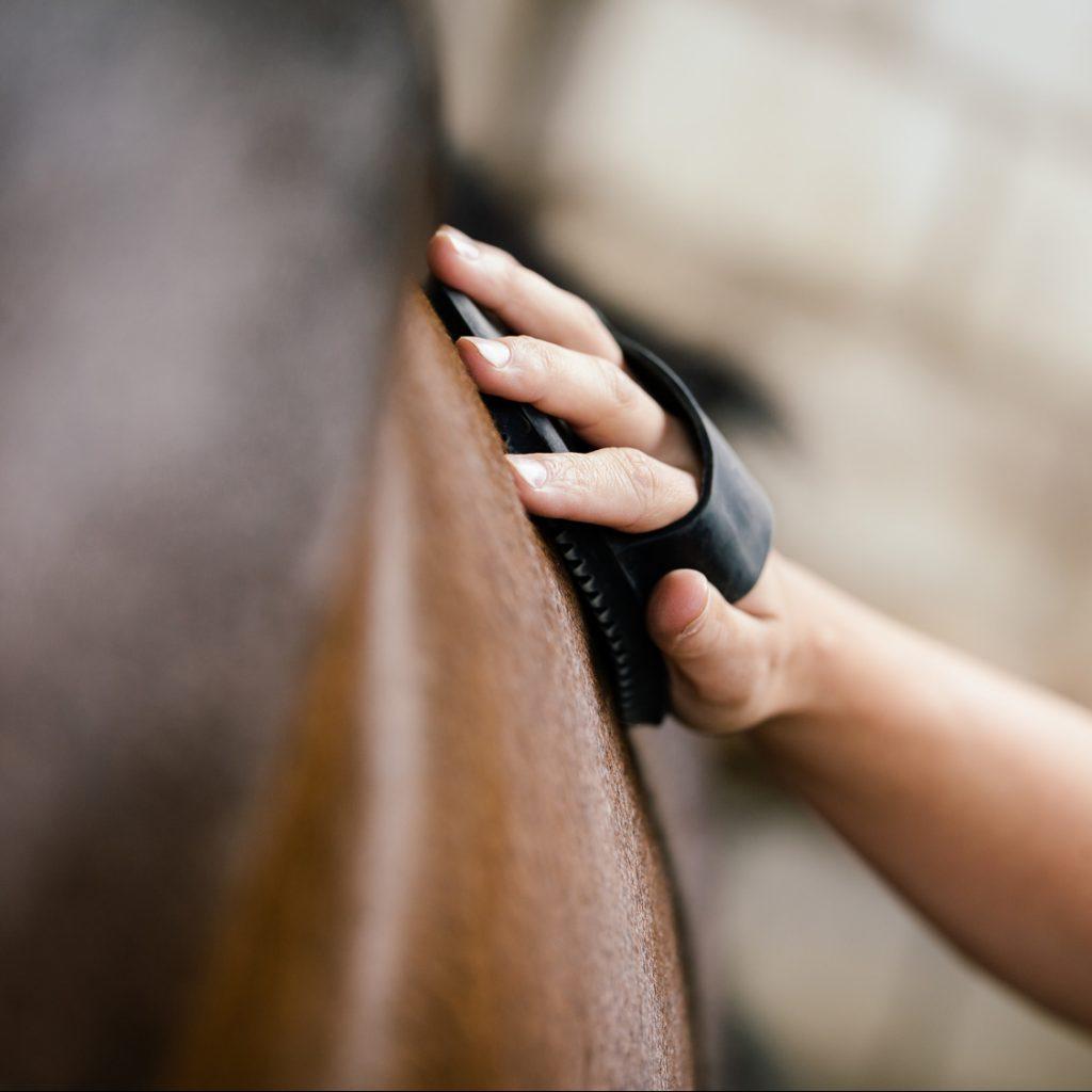 Pferdepflege: So pflegst Du Dein Pferd richtig