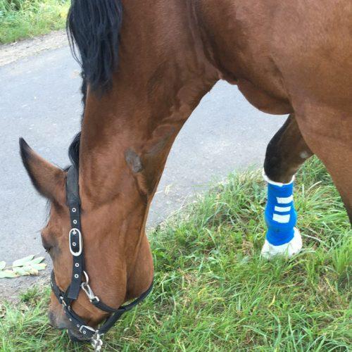 Hufgeschwür: Wie helfe ich meinem Pferd?