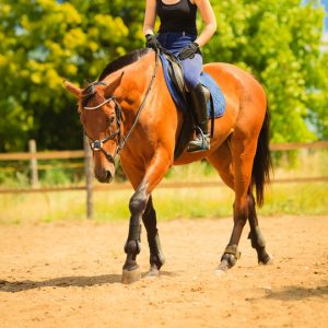 Übungen für eine starke Muskulatur am Pferderücken