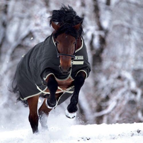 Entspannter Pferderücken im Winter