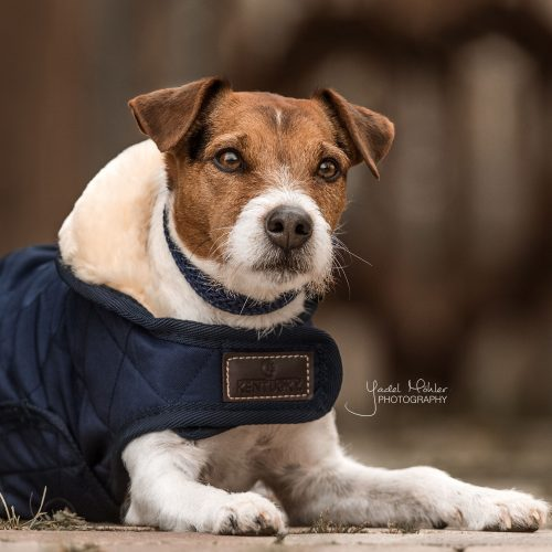 Kentucky Dogwear: Hundedecken mit komfortabler Eleganz
