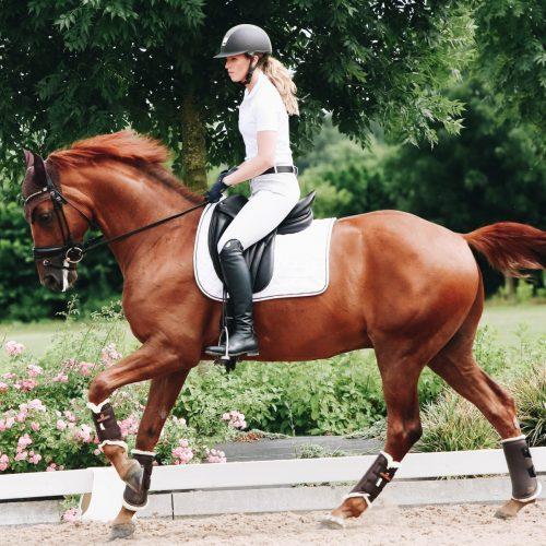 Beinschutz des Pferdes: Warum Gamaschen und Hufglocken so wichtig sind!