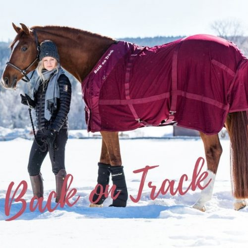Back on Track®: Regeneration von Pferd, Mensch und Hund