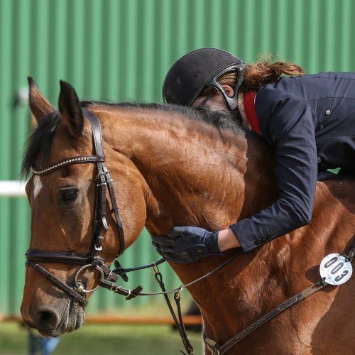 Weltpferdetag: Aus Liebe zum Pferd