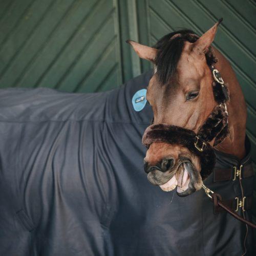 Funktionsprodukte: Die wirksame Unterstützung für Dein Pferd